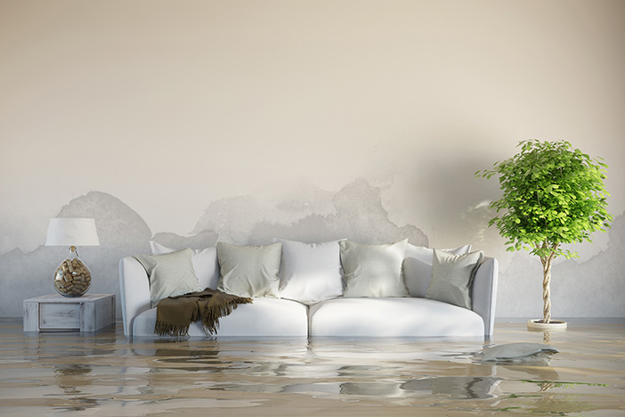 flooded living room in modern living room couch and large plant in view