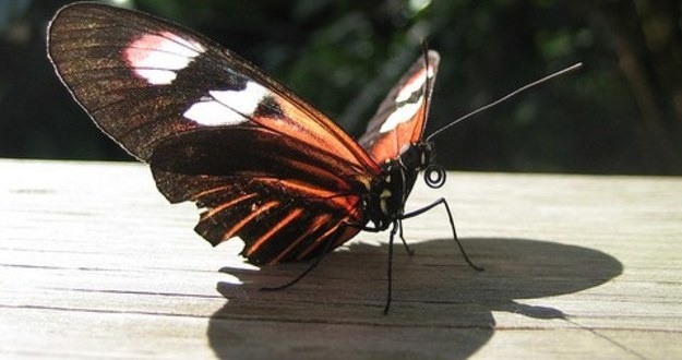 butterfly effect changing real estate investing business